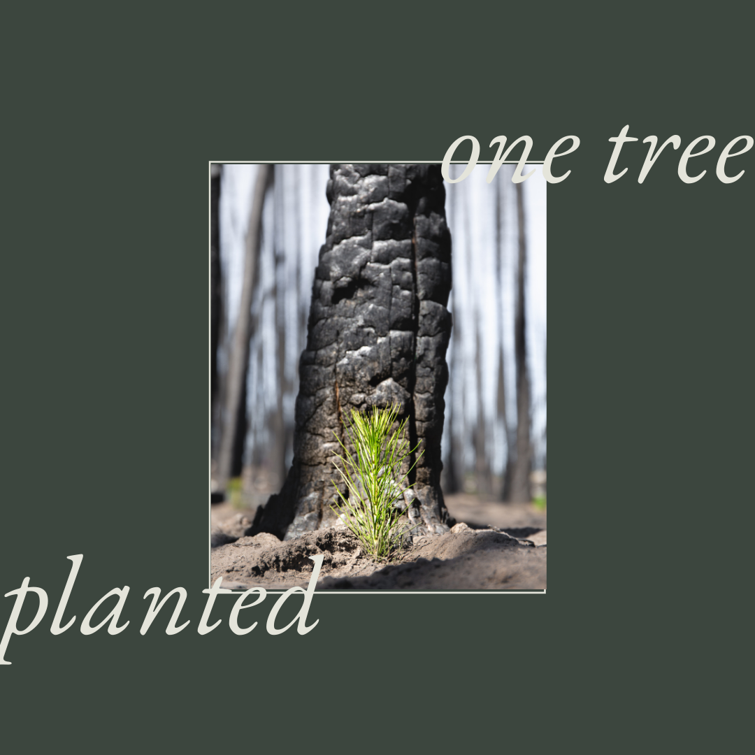 One Tree Planted with Every Hills & West Bag